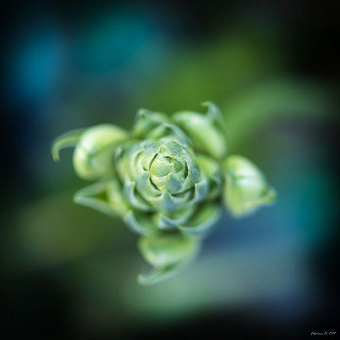 Τετράγωνο λουλούδι 5