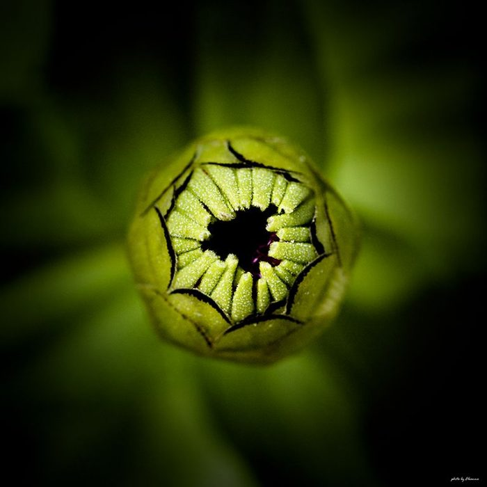 Τετράγωνο λουλούδι 1