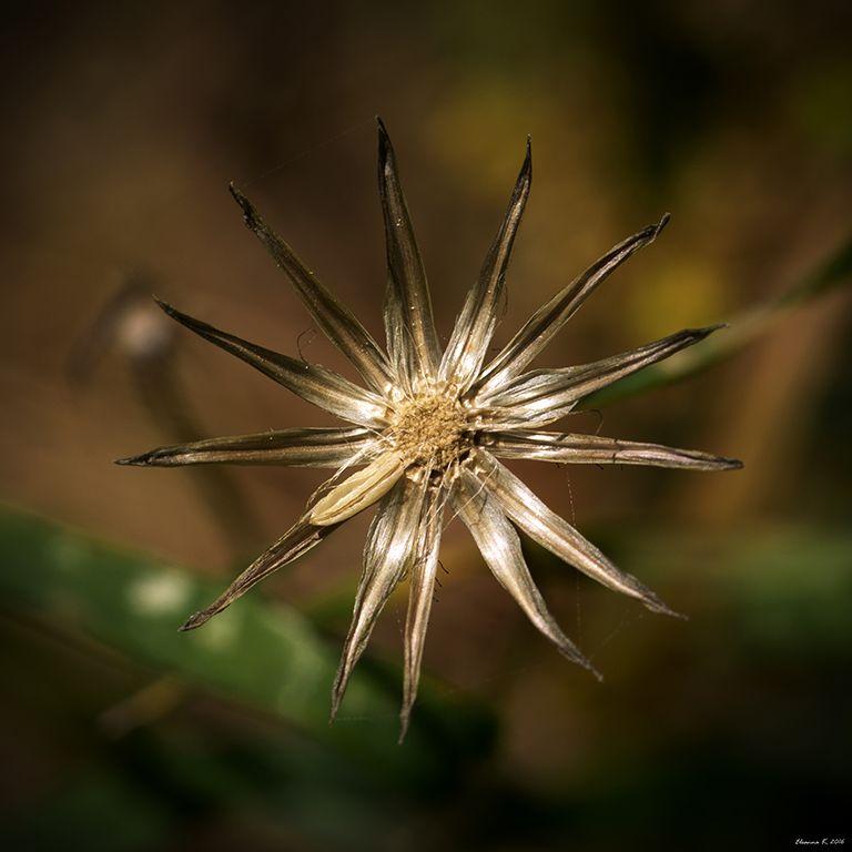 Τετράγωνο λουλούδι 2