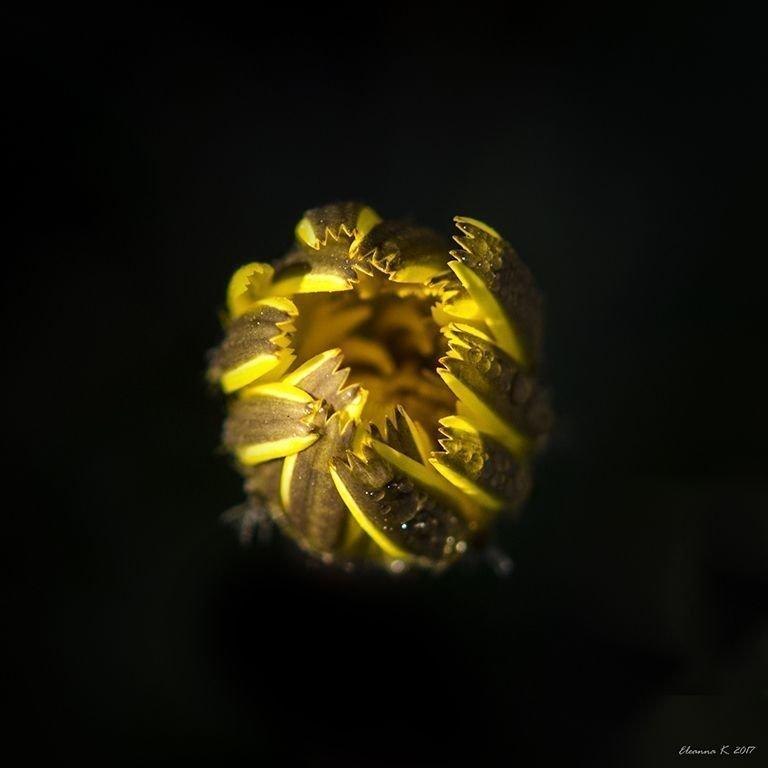 Τετράγωνο λουλούδι 3
